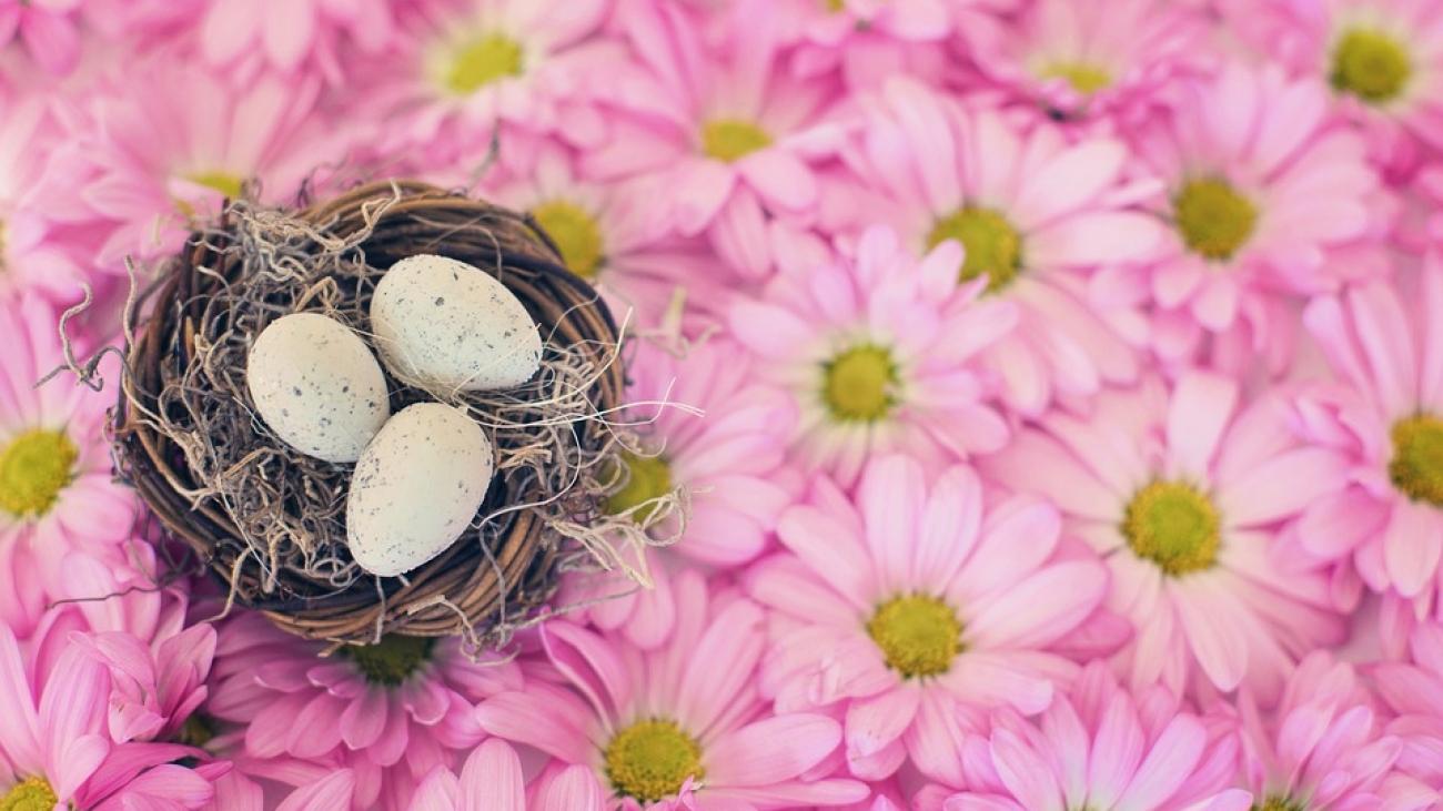 birds-nest-2121590_960_720